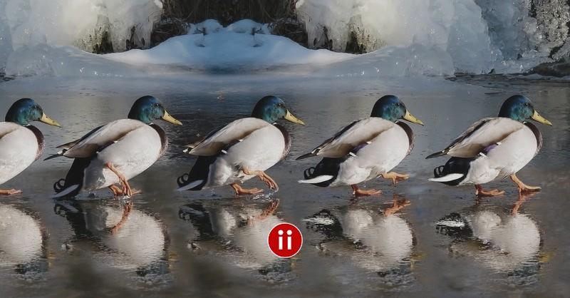 X-Ray Hack in der Suchmaschine DuckDuckGo